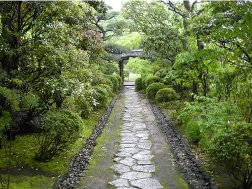 Ogród herbaciany w Roji