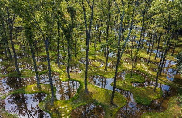 w ogrodzie junya-ishigami-associates-art-biotop-water-garden_01