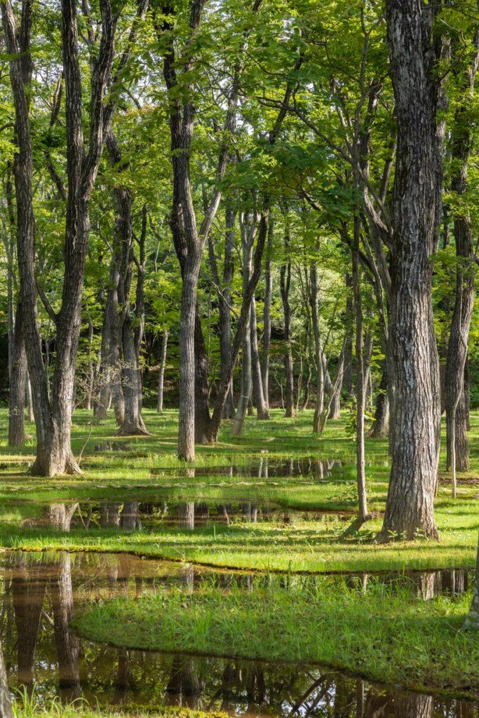 w ogrodzie junya-ishigami-associates-art-biotop-water-garden_02