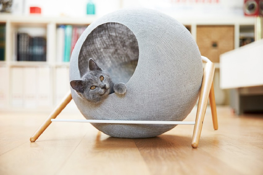 Stylowy mebel dla kota