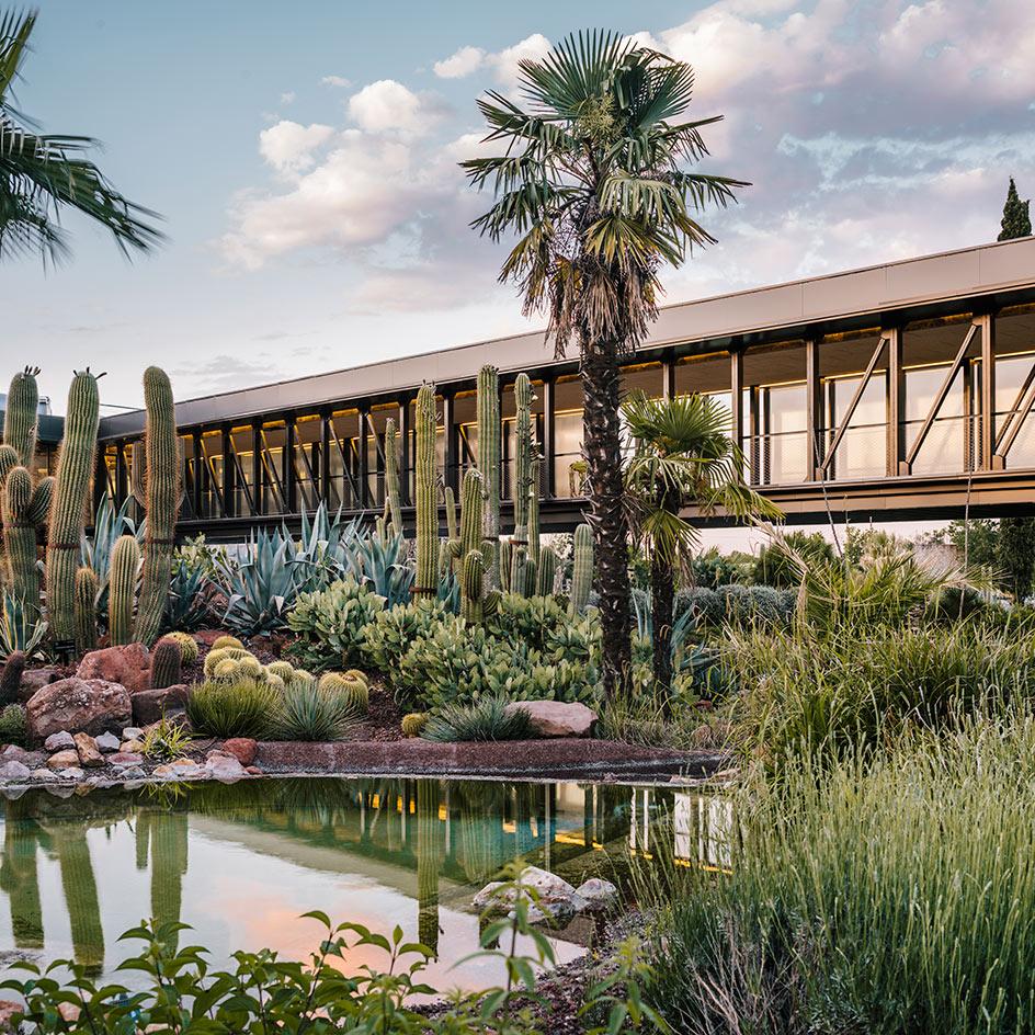 Kaktusowa oaza w madryckim Desert City