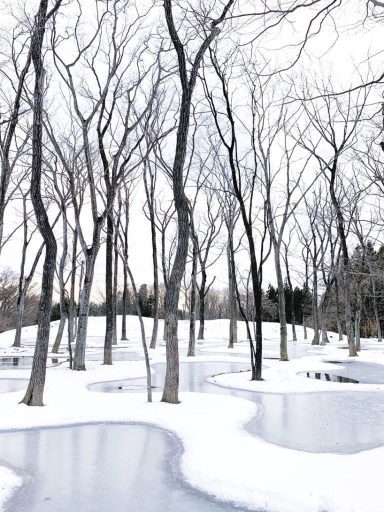 w ogrodzie junya-ishigami-associates-art-biotop-water-garden_03